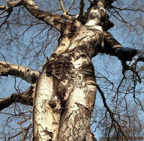 Những hình dáng kỳ quái của cây trong thiên nhiên Cay-1