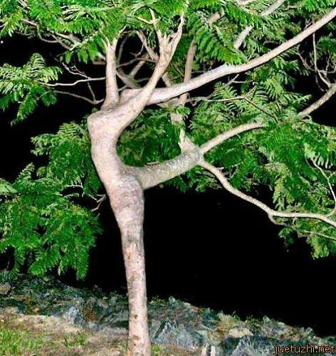 Những hình dáng kỳ quái của cây trong thiên nhiên Cay-17