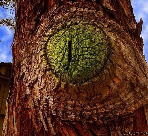 Những hình dáng kỳ quái của cây trong thiên nhiên Cay-16