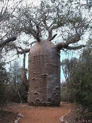 Những hình dáng kỳ quái của cây trong thiên nhiên Cay-3