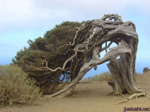 Những hình dáng kỳ quái của cây trong thiên nhiên Cay-19
