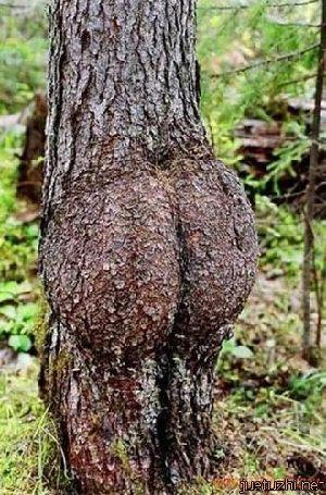 Những hình dáng kỳ quái của cây trong thiên nhiên Cay-6