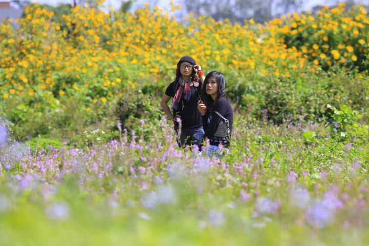 lapine Kinh nghiệm du lịch Đà Lạt   mùa hoa Dã Quỳ