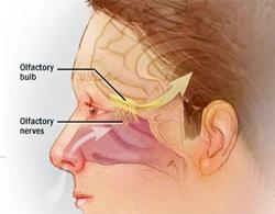 Ca thứ hai chết do amip ăn não người được xác nhận
