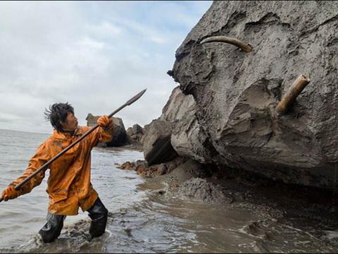 Hé lộ lịch sử bi hùng từ xác voi ma mút bị đâm chết