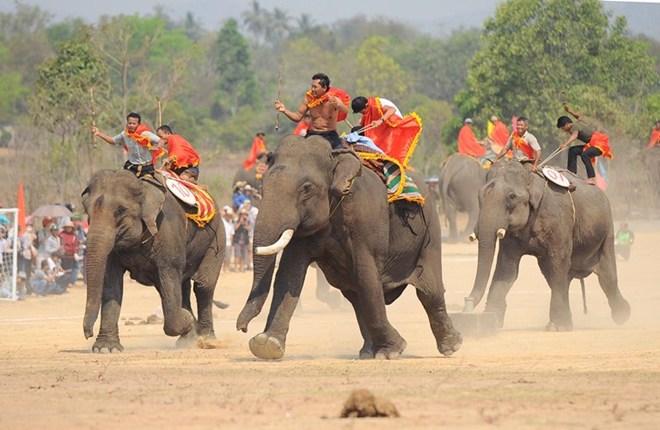 Buôn Đôn vào hội thi voi đá bóng, voi chạy, voi vượt sông