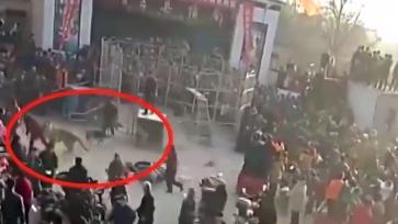 Hổ gánh xiếc xổng chuồng lúc đang biểu diễn, tấn công khán giả nhí