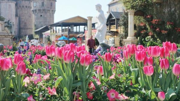 Ngắm nhan sắc rực rỡ của những nàng Tiên hoa ở Sun World Ba Na Hills